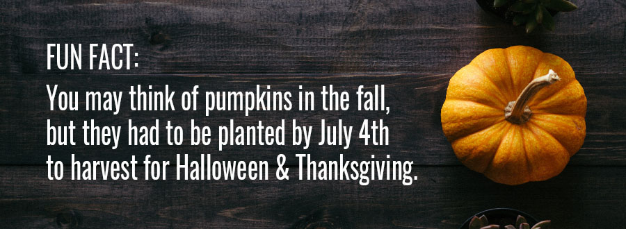 pumpkin-fact-blog